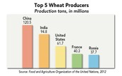 Top 5 Wheat Producers