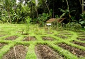 """Helen and Scott Nearing: Environmentally friendly and Balanced """"Permaculture"""" Pioneers"""