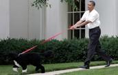 Puppy President