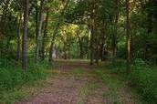trail east