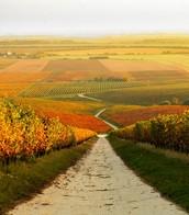 VILLÁNY - HUNGARY'S SOUTHERNMOST WINE REGION