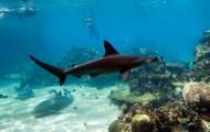 Scuba Diving in Brunei