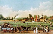 Cotton Plantation in Georgia