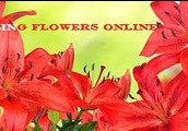Buy Flowers Online Is Easy Along With The Delivery Is Constantly Rapid