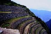 Inca Farming