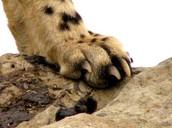 Grip Claws