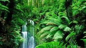 The Tropical Rainforest!