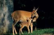 mamma and baby