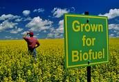 BioFuel Farms
