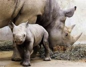 How do endangered species affect us humans?