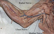 Real Picture Of Nerves
