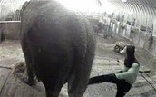 zoo care takers mistreating
