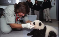 A zoologist with a baby panda