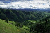 Foothills 1