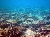 In Australia 3O% of coral reef dying 20% is died.