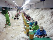 Cotton Makers