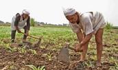 Farming Faraohs