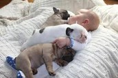 a baby with puppies.