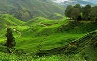 Malaysian Farms