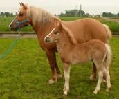 Prometea the Horse