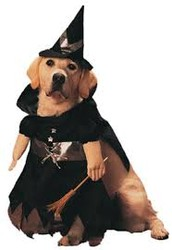 Halloween pet clothes