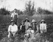 Asians were sent to 400 farms as an option for a job