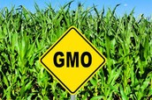Advantages of Genetically Modifying Crops