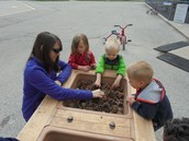 Exploring Pine cones, acorns, and walnuts