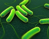 What is the cause of typhoid??