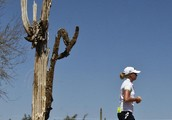 INSECTS THAT AFFECT THE SAGUARO'S HEALTH