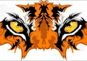 The Eye Of The Tiger is back and better than ever!