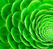 2nd Period: Green