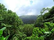 יש שפע של עצים ביערות הגשם