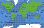 Where Orcas Live