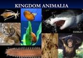 Kingdom and Domain