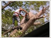 Trees service
