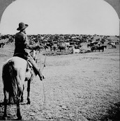 A old depiction of a cowboy on a cattle drive