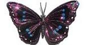 La mariposa multicolor .