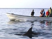 Conservacion de vida marina
