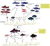 cross unit/ecology/evolution/