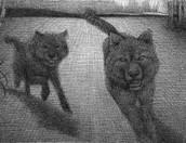 wolfs at beginning
