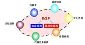 認識EGF