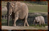 An Elephants Baby