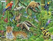 dieren in het tropisch regenwoud