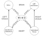 The Brain and Heart Connection