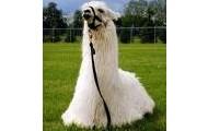 Sitting Llama