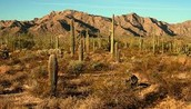 a desert in Mexico