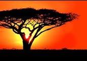 Africa's nature