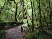 Un bosque que puede hacer una caminata