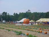 Boone Hall Pumpkin Patch